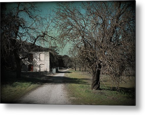 Sycamore Grove Park Metal Print featuring the photograph Way Back When by Laurie Search