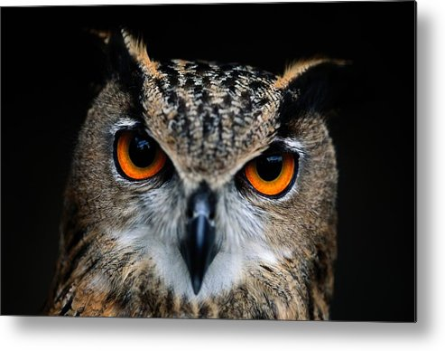 Animals Metal Print featuring the photograph Close Up Of An African Eagle Owl by Joel Sartore