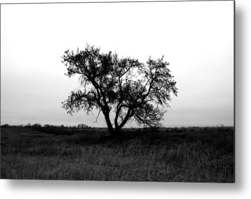 Elm Metal Print featuring the photograph Prairie Dog by The Artist Project