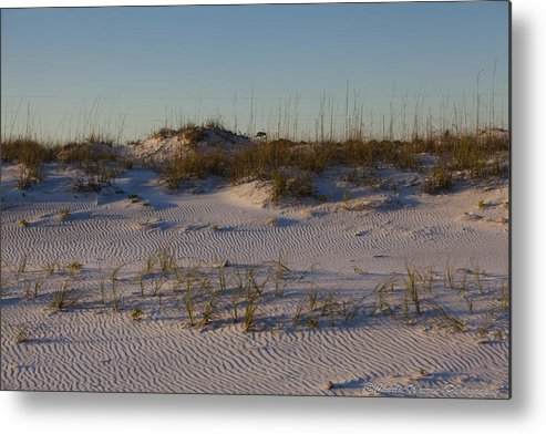 Sand Dunes Metal Print featuring the photograph Seaside Dunes 4 by Charles Warren