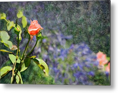 Rose Metal Print featuring the digital art Rose Elegance by Sherry Curry