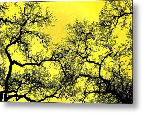Digital Art Metal Print featuring the photograph Tree Fantasy 18 by Lee Santa