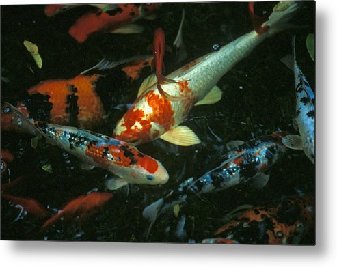 Koi Metal Print featuring the photograph The Koi Pond by Marc Bittan