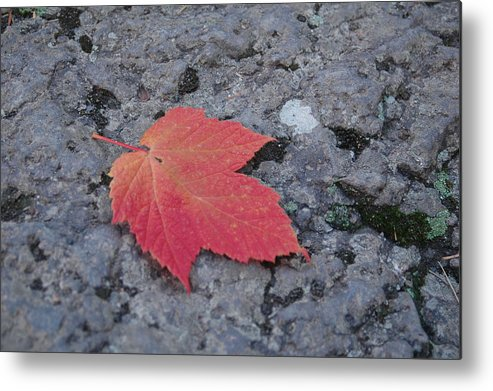Leaf Metal Print featuring the photograph Untitled by Kathy Schumann