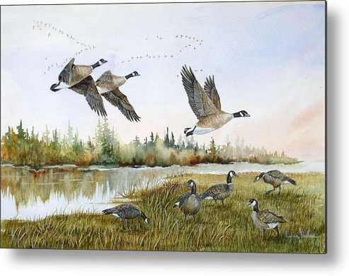 Aleutian Geese Metal Print featuring the painting Aleutian Geese At Lake Earl by Lynne Parker