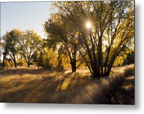 Fall Metal Print featuring the photograph Autum Sunburst by Jerry McElroy