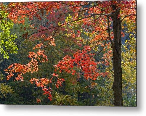 Foliage Metal Print featuring the photograph Autumn Palette by Neil Doren