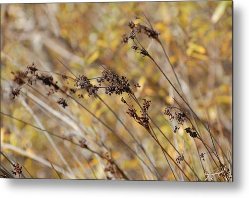 Brown Metal Print featuring the photograph Brown Wildgrass by Jean Booth