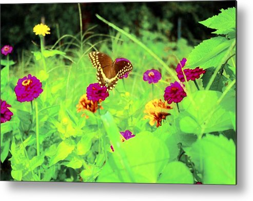 Flowers Metal Print featuring the photograph Butterfly At Work by Jill Tennison