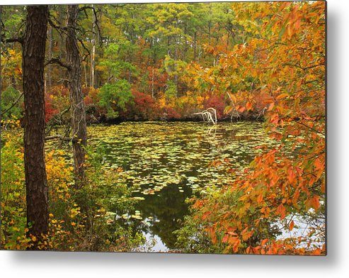 Cape Cod Metal Print featuring the photograph Cape Cod Kettle Pond Foliage by John Burk