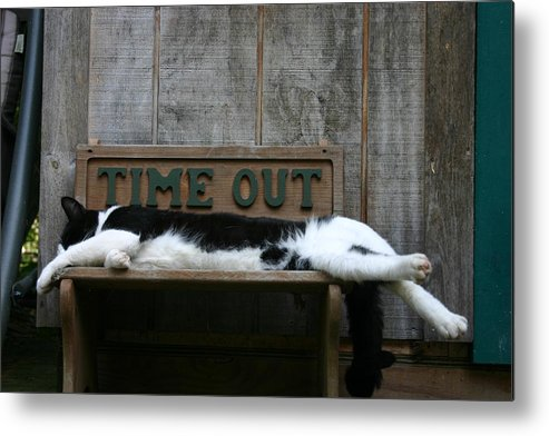 Cat 2 Metal Print featuring the photograph Cat Time Out by Kevin Dunham