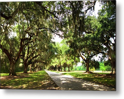 Photo Metal Print featuring the photograph Charleston Oaks 3 by Alan Hausenflock