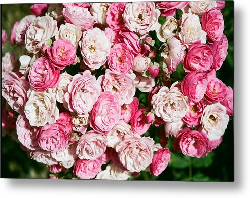 Rose Metal Print featuring the photograph Cluster Of Roses by Dean Triolo