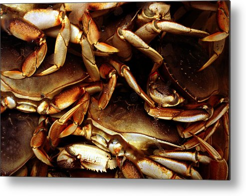 Ocean Metal Print featuring the photograph Crabs Awaiting Their Fate by Jennifer Bright