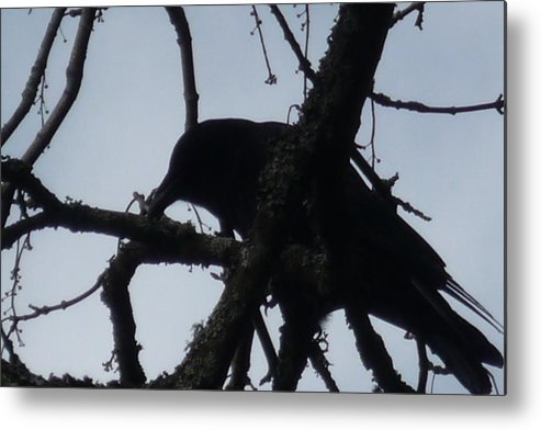Photo Metal Print featuring the photograph Crow Silouette by Dawna Raven Sky