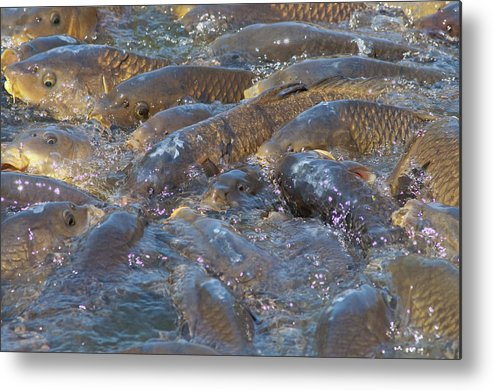 Animated Metal Print featuring the photograph Crowded by Craig Hosterman