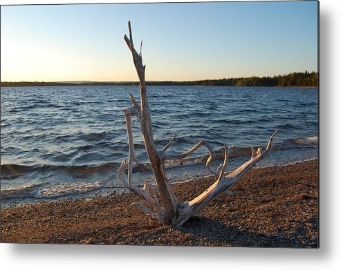 Water Metal Print featuring the photograph Driftwood by Donald Mac Fadyen