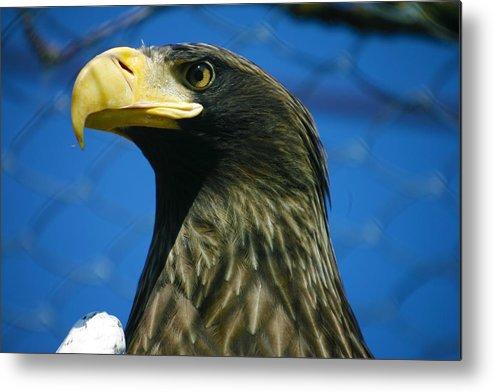 Eagle Metal Print featuring the photograph Eagle by Mopics Eu