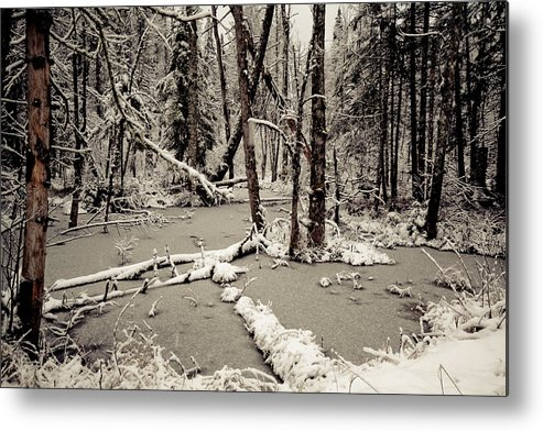 Scenic Metal Print featuring the photograph Early Winter by Todd Bissonette