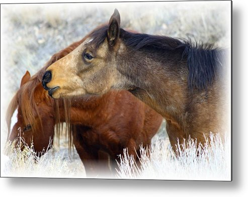 Wild Metal Print featuring the photograph Enchanting by Gene Praag