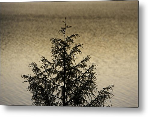 Lake Metal Print featuring the photograph Evergreen Lake by Richard Steinberger