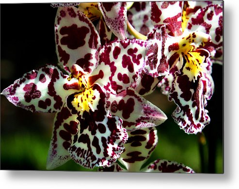 Ribet Metal Print featuring the photograph Exotic Orchids Of C Ribet by C Ribet