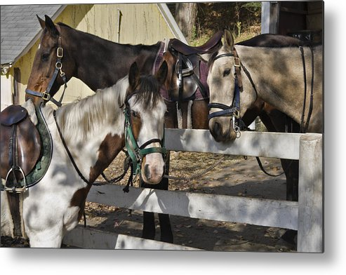 Horse Metal Print featuring the photograph Faces by Jack Goldberg