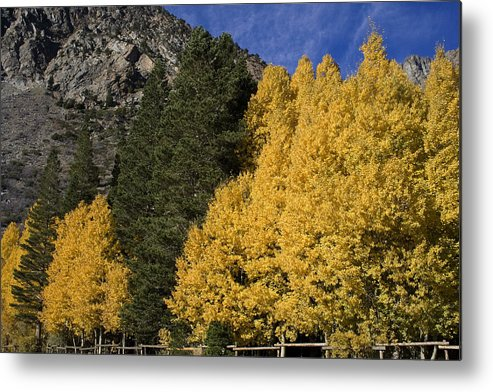Fall Metal Print featuring the photograph Fall Colors by Jennifer Lynn