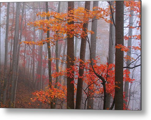 Landscape Metal Print featuring the photograph Fall Fog. by Itai Minovitz