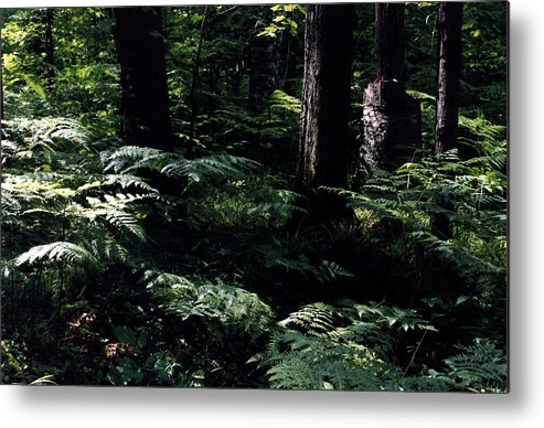 Forest Metal Print featuring the photograph Ferns In The Forest Wc by Lyle Crump