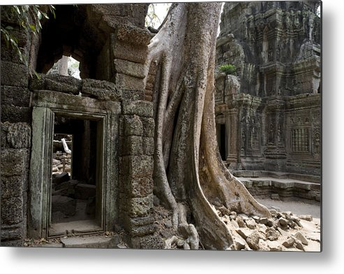 Day Metal Print featuring the photograph Fig Tree Growing Over Crumbling Ruins by Rebecca Hale