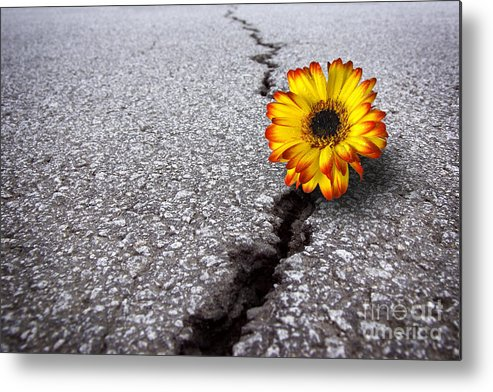 Abstract Metal Print featuring the photograph Flower In Asphalt by Carlos Caetano