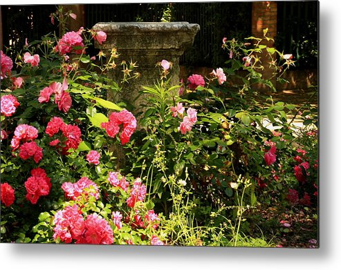 Venice Metal Print featuring the photograph Flowers In Garden In Venice by Michael Henderson