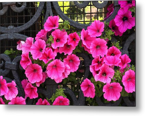 Flowers Metal Print featuring the photograph Flowers On Iron Grate In Venice by Michael Henderson