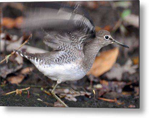 Bird Metal Print featuring the photograph Flutter by Glenn Gordon