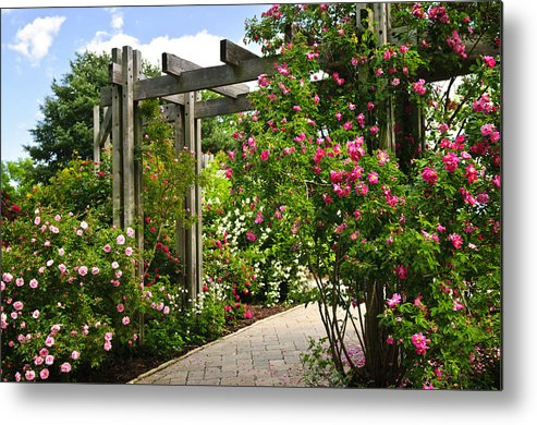 Garden Metal Print featuring the photograph Garden With Roses by Elena Elisseeva