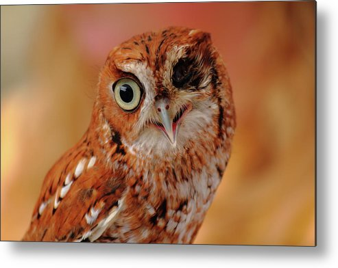 Owl Metal Print featuring the photograph Harsh by Jamie Smith