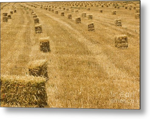 Hay Metal Print featuring the photograph Hay Field by Juan Silva