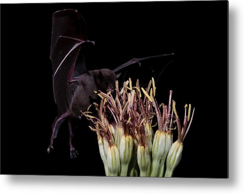 Nature Metal Print featuring the photograph Hummm Smells Good by E Mac MacKay