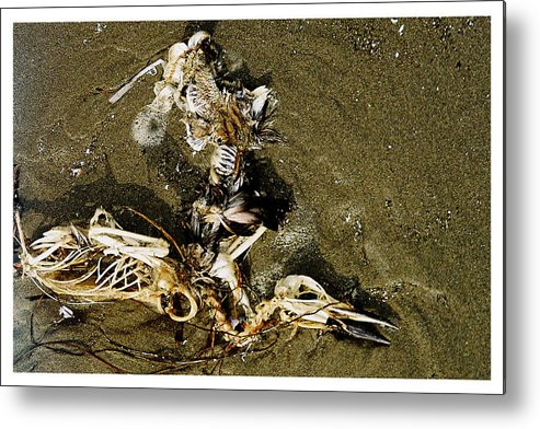 Pelican Metal Print featuring the photograph Impermanence by Claire McGee