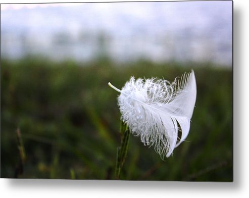 Feather Metal Print featuring the photograph In The Wind by Jamie Smith