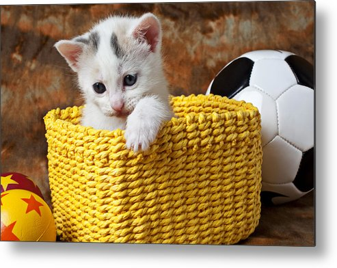 Kitten Metal Print featuring the photograph Kitten In Yellow Basket by Garry Gay