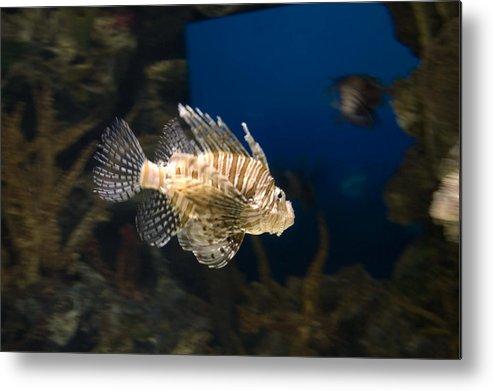 Fish Metal Print featuring the photograph Light Fish by Juan Potts