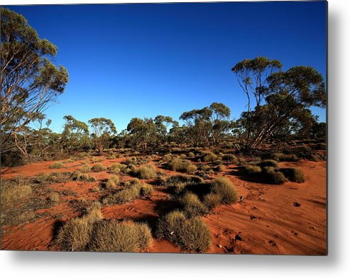 Mallee Metal Print featuring the photograph Mallee And Spinifex by Tony Brown