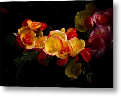 Begonia Metal Print featuring the photograph Night Begonias Two by John Ater