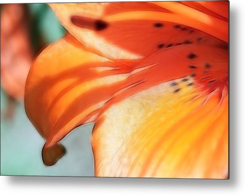 Flowers Metal Print featuring the photograph Orange Petal Dreams by Lesley Smitheringale