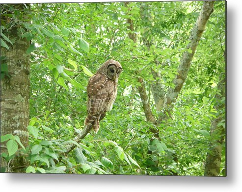 Owl Metal Print featuring the photograph Owl II by Kathy Schumann