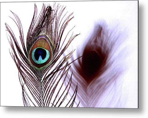 Photograph Metal Print featuring the photograph Peacock 8 - Doppleganger by Stormshade Designs