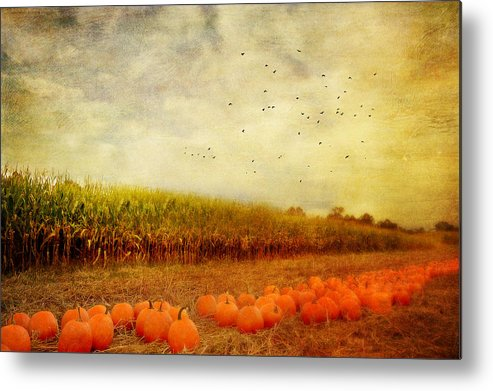Pumpkins Metal Print featuring the photograph Pumpkins In The Corn Field by Kathy Jennings