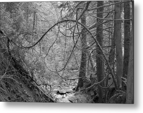 Black Metal Print featuring the photograph Seeking New Light by J D Banks